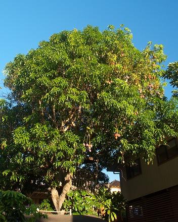 Mangopan
